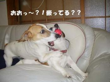 うにの反撃②.jpg