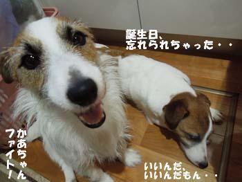 すねりんご②.jpg