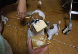 ケーキ騒動⑤.jpg