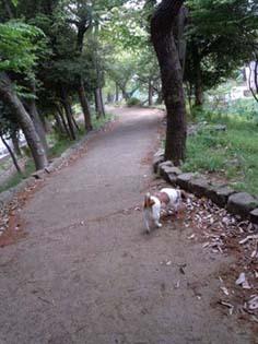 公園遊歩道①.jpg