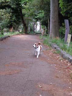公園遊歩道②.jpg