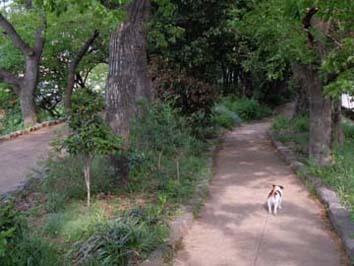 公園遊歩道③.jpg