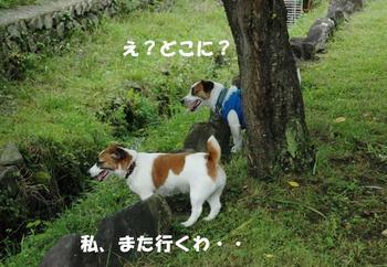 小川へダイブ①.jpg