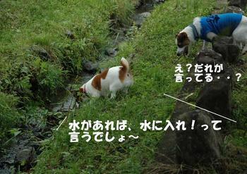 小川へダイブ③.jpg