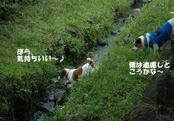 小川へダイブ④.jpg