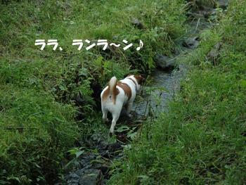 小川へダイブ⑤.jpg