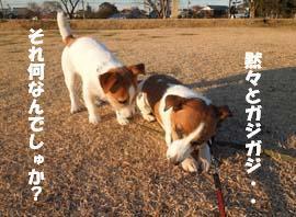 広場散歩③.jpg
