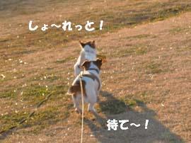 広場散歩⑥.jpg