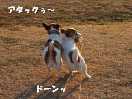 広場散歩⑨.jpg