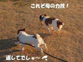 広場散歩⑫.jpg
