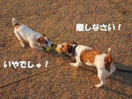 広場散歩⑮.jpg