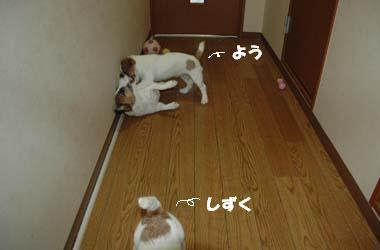 新構成_がう_よう③.jpg