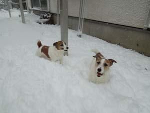 雪⑥.jpg
