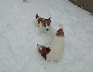 雪⑦.jpg