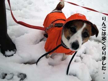 雪散歩21.jpg