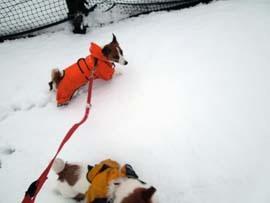 雪散歩22.jpg
