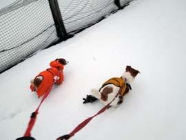 雪散歩23.jpg