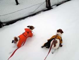 雪散歩24.jpg