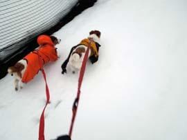 雪散歩25.jpg
