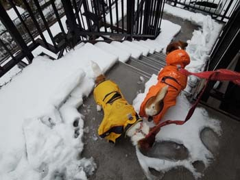 雪散歩①.jpg