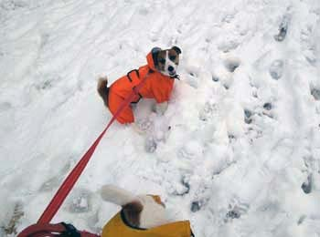 雪散歩②.jpg