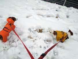 雪散歩③.jpg