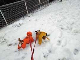 雪散歩④.jpg