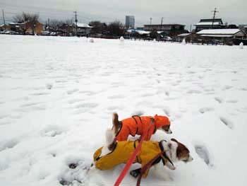 雪散歩⑦.jpg