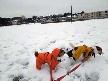 雪散歩⑨.jpg