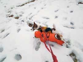雪散歩⑪.jpg
