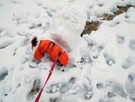 雪散歩⑫.jpg
