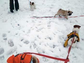 雪散歩⑭.jpg