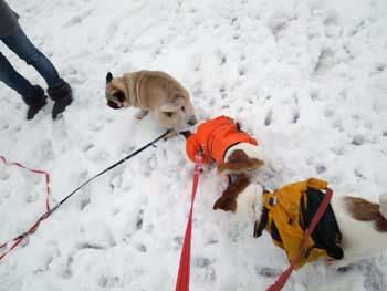 雪散歩⑮.jpg