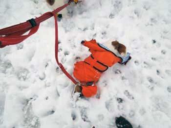 雪散歩⑯.jpg