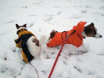 雪散歩⑰.jpg
