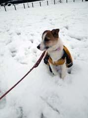 雪散歩⑱.jpg