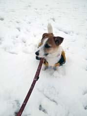 雪散歩⑲.jpg